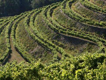 Altos de Torona, el viñedo más grande de Rías Baixas