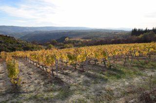 Xornadas de portas abertas da Ruta do Viño Monterrei