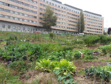 Santiago de Compostela, referente en España na aposta polas hortas urbanas