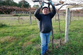 """""""É clave que o sector do viño se manteña en mans galegas e evitar que pase como no lácteo"""""""