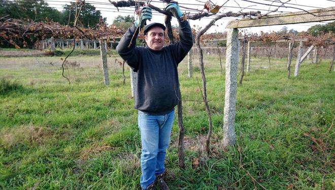 Denuncian que o Ministerio discrimina a Galicia no reparto de axudas ao sector do viño