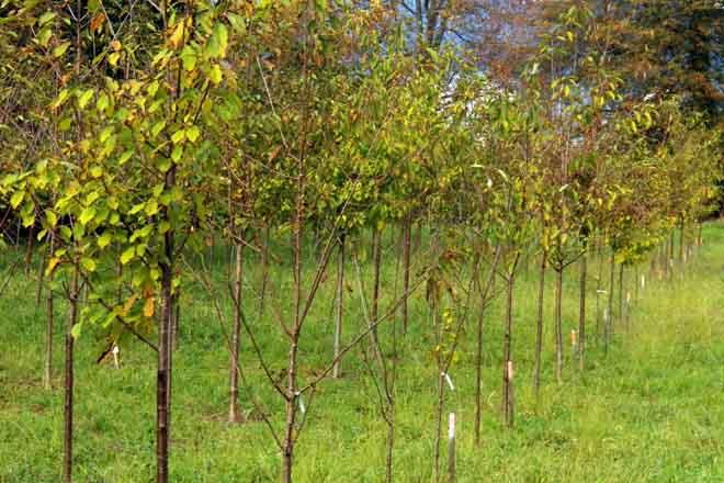 Taller de plantación de frondosas en el monte demostrativo del Pico Sacro