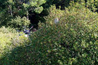 Os drons: ¿A gran esperanza para combater a Vespa Velutina?
