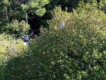 Los drones: ¿La gran esperanza para combatir la Vespa Velutina?