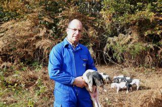 """""""Córrese o risco de que a demanda de carne de Porco Celta sexa moi superior á oferta"""""""
