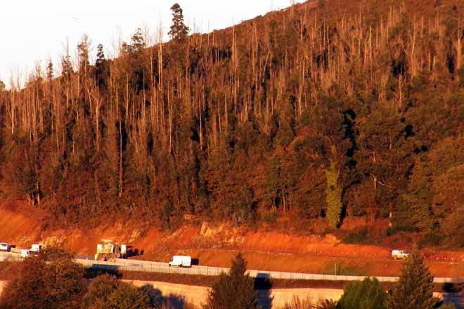 Conta atrás para a saca de tres millóns de toneladas de madeira queimada