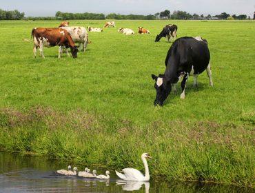 O pastoreo será obrigatorio en Holanda en 2020