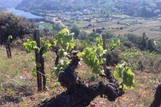 Adega Rúa, máis de medio século de cooperativismo vitivinícola