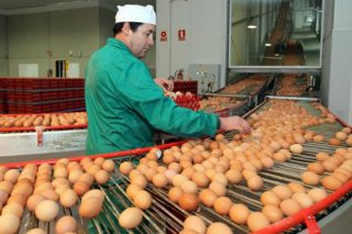 Suba do porco cebado e baixada dos ovos en Silleda