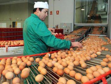 Os produtores de ovo poñen en marcha a primeira estratexia conxunta de promoción