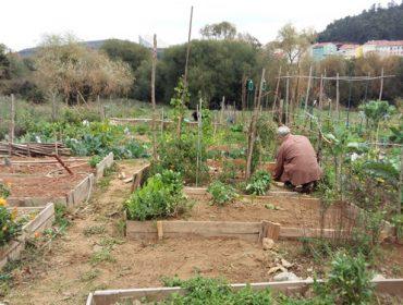 Autorizada la agricultura de autoconsumo si la finca está a menos de 500 metros de la vivienda