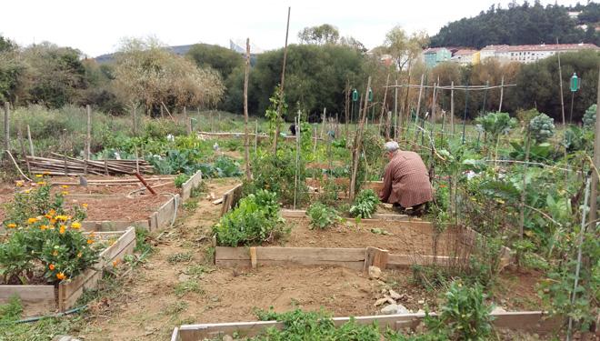 Permítese a agricultura de autoconsumo se a leira está a menos de 500 metros da vivenda