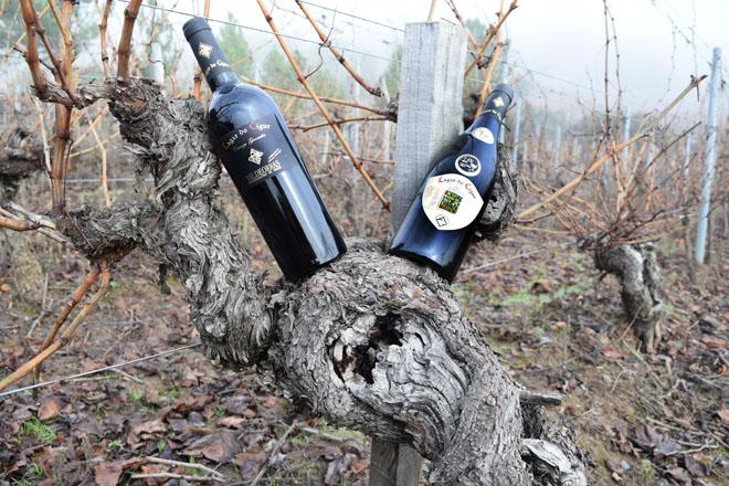 Este é o viño galego elixido en Alemaña o mellor de España: Lagar do Cigur Crianza 2013