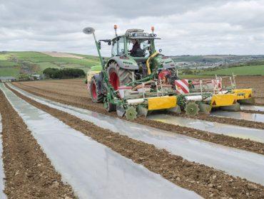 Delagro ensaiará en 2018 un novo sistema de cultivo do millo forraxeiro
