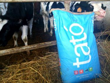 Tató: leite maternizado para maximizar o crecemento dos becerros