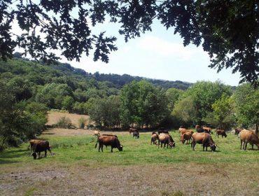 Jornada sobre las herramientas para la movilidad de las tierras en Galicia