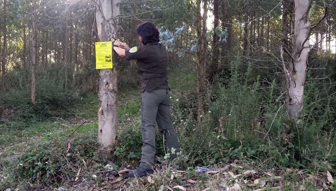 Un axente forestal coloca un cartel que avisa do incumprimento da normativa de distancias do arborado a vías de comunicación.