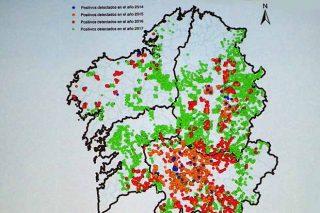 Así se expandió la avispilla del castaño en Galicia en cuatro años