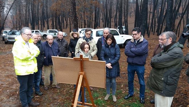 Medio Rural valora a proposta dun plan de restauración de montes queimados