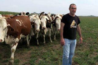 Jesús Méndez, nos pastos, cun dos seus rabaños de vacas.