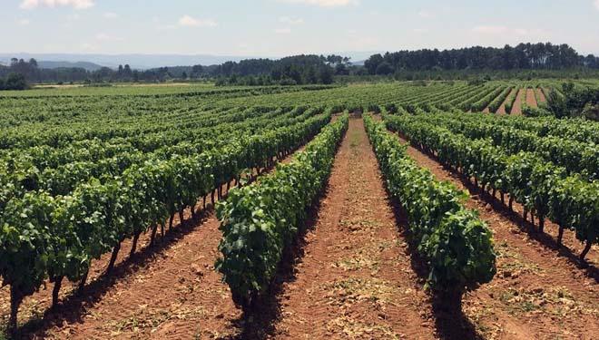 """""""La viña y la tierra es algo que viví desde pequeña y que llevo en las emociones"""""""