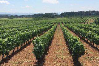 Presentación dos viños da DO Monterrei en Madrid