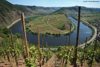 Vantaxes de recuperar o uso da madeira na viña e en adega