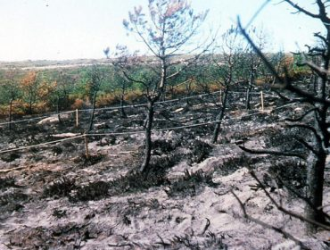 10 pasos clave para recuperar os ecosistemas forestais queimados