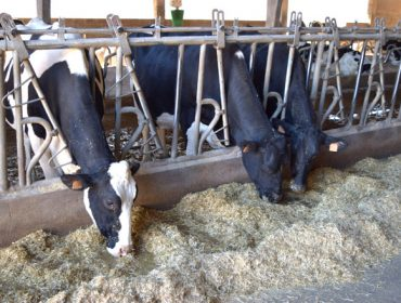 O Goberno reduce o IRPF aos gandeiros de vacún de leite