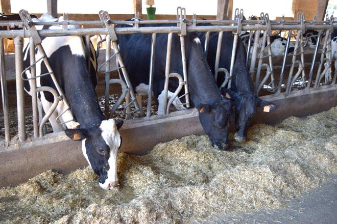 'Conta láctea', a aplicación para granxas orientada a calcular custos de produción