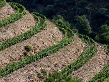 ¿Cuáles son los mejores sistemas de plantación de viñedo en terrenos con pendiente?