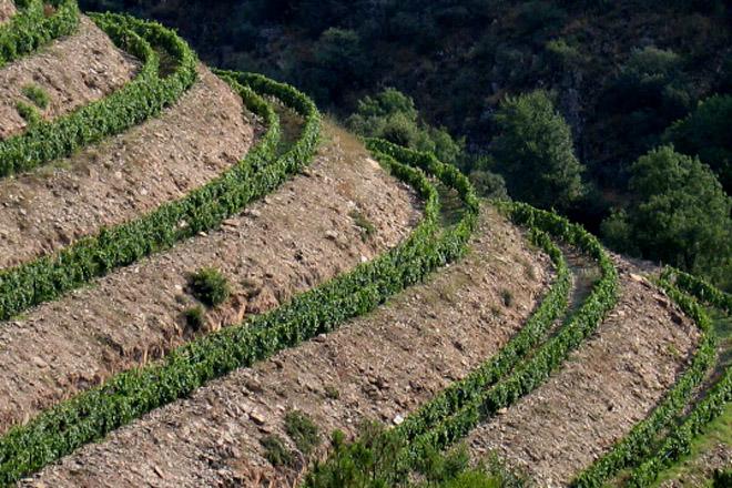 Cuáles Son Los Mejores Sistemas De Plantación De Viñedo En