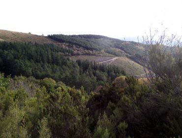¿Cómo se va a planificar el monte en Galicia?