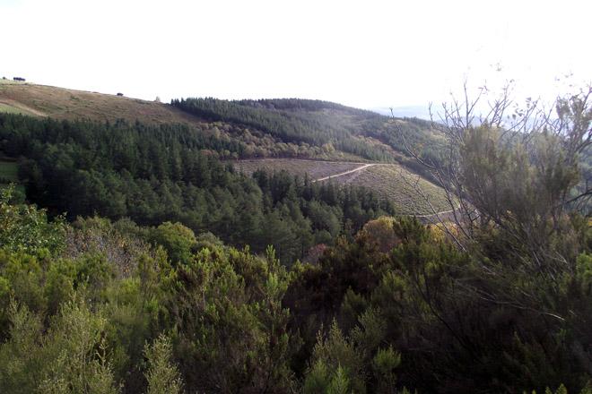 Como se vai planificar o monte en Galicia?