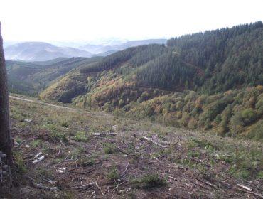 Chequeo ás Sofor, solución para a xestión do minifundio forestal?