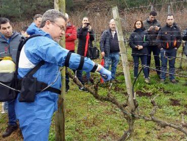Basf presenta un produto innovador para previr as enfermidades da madeira en viñedo