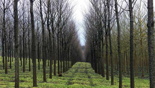 Bosques Naturales, gestión intensiva de maderas nobles en turnos cortos