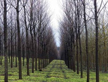 Destacan a importancia da xestión forestal sustentable para afrontar a nova etapa post-Covid