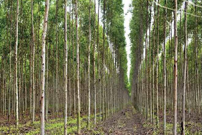 'Multicote Agri', nutrición eficaz para as árbores forestais