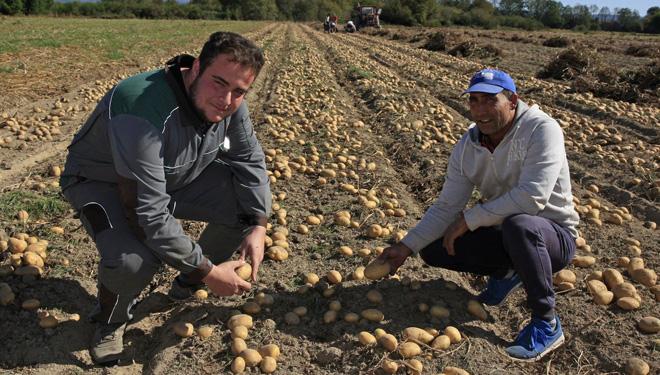 Daniel Joga cun dos traballadores que recollen a pataca a man. Foto: Daniel Portela, La Voz de Galicia
