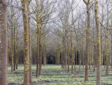 Obradoiros online de FSC sobre xestión e certificación forestal