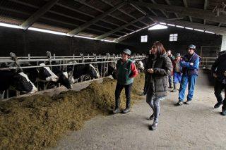 A Xunta solicitará este mes declarar a provincia de Pontevedra como libre de tuberculose bovina