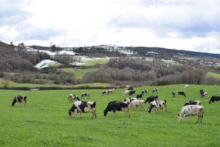 Fijado el importe de las ayudas asociadas por vacuno de leche y vacas nodrizas