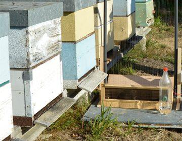 Curso sobre control da vespa velutina o vindeiro luns en Monforte