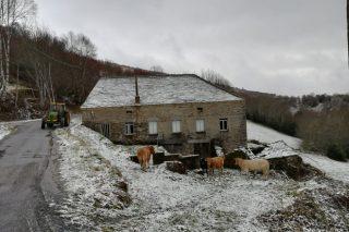 Fotos de la nieve en ganaderías de Galicia