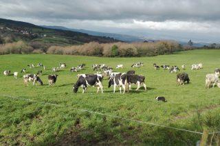 A Xunta márcase como obxectivo que Galicia sexa declarada rexión libre de tuberculose bovina