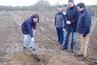 O proxecto de selección do carballo culmina coa plantación de 1.000 exemplares