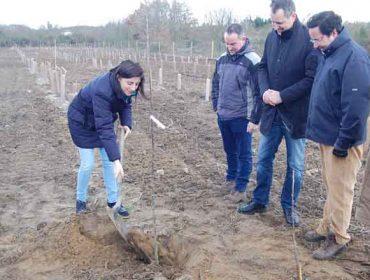 El proyecto de selección del roble culmina con la plantación de 1.000 ejemplares