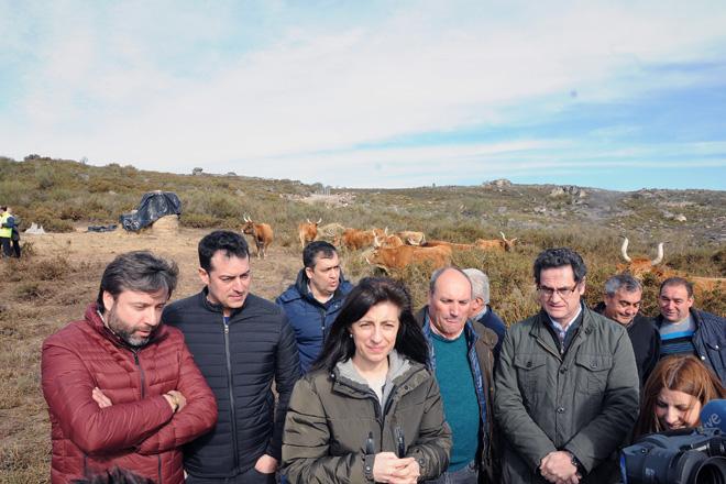 Medio Rural confirma que os gandeiros afectados polos lumes cobrarán a PAC e poderán facer pastoreo