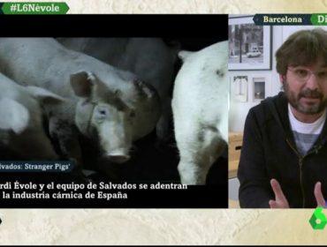 Leccións para o sector gandeiro do programa de Salvados sobre o sector porcino